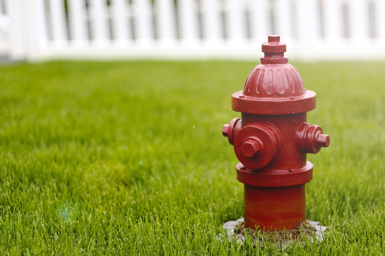 image - 6 Ways to Protect Your Lawn This Summer