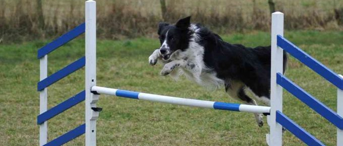 Can You Send Your Dog Away to be Trained?