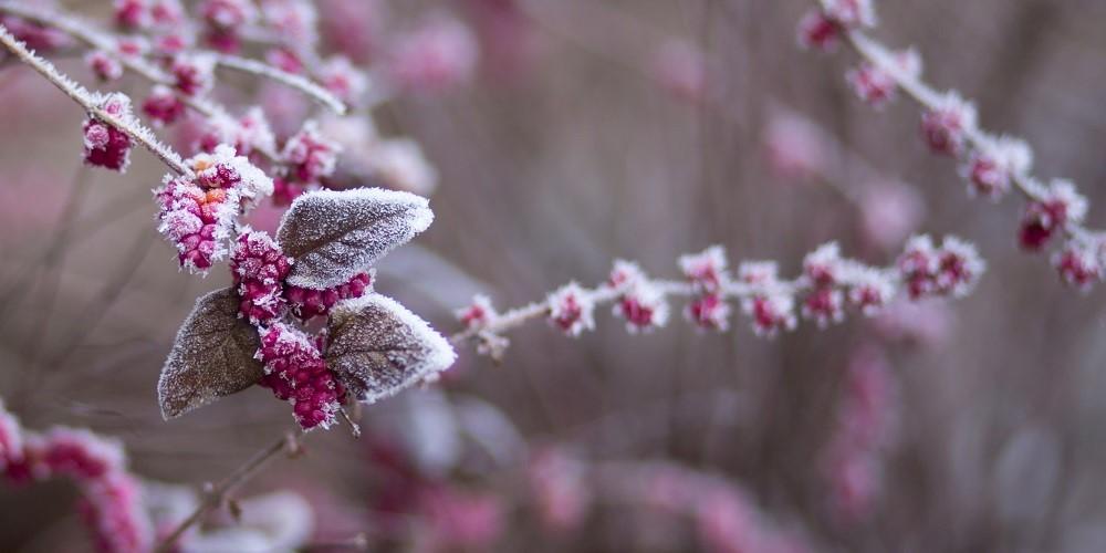 image - Hardy Perennials