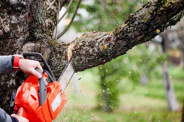 Removing a Tree Takes a Good Planning