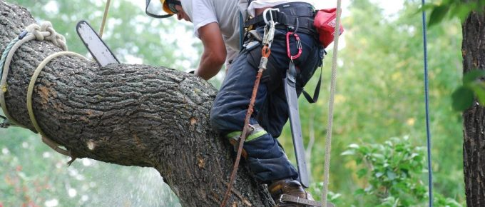 Why Look for a Tree Removal Service Professional for Dangerous Tree