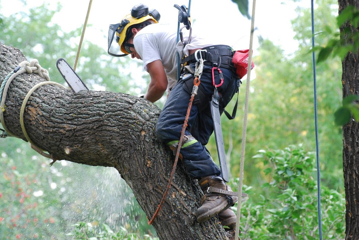 image - Why Look for a Tree Removal Service Professional for Dangerous Tree