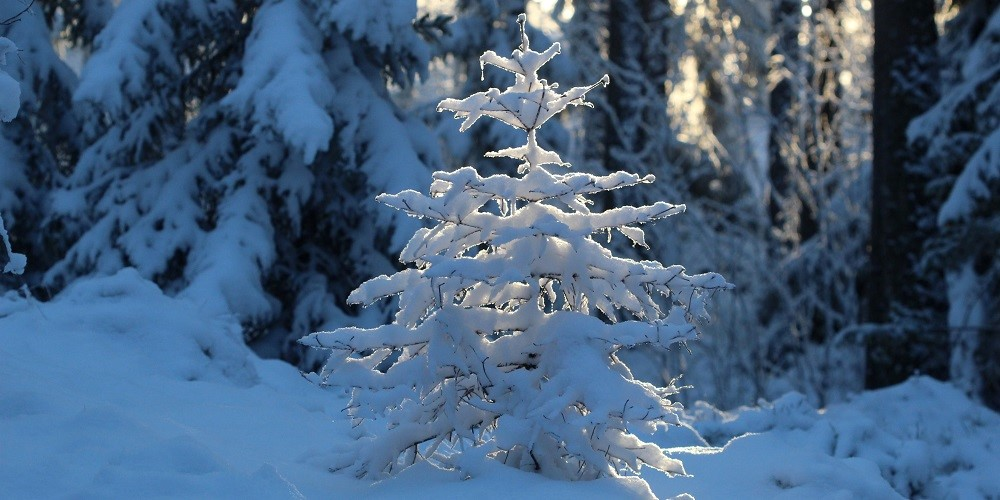 image - Winter Protection for Trees