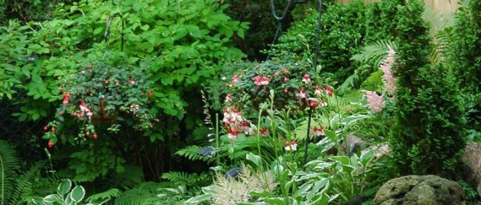 Safest Ways to Kill Weeds in Your Garden Without Harming Other Plants