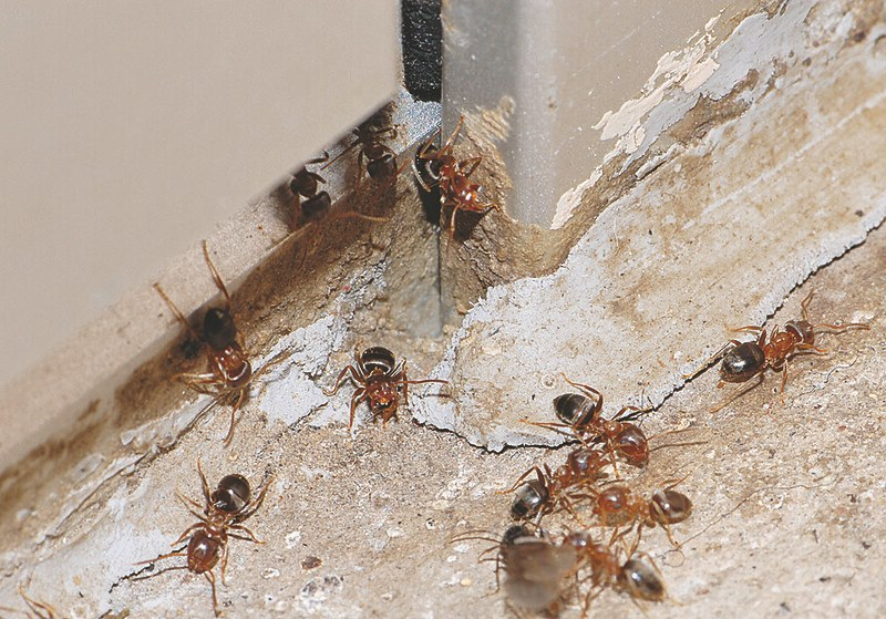 image - Do it yourself Home Pest Control