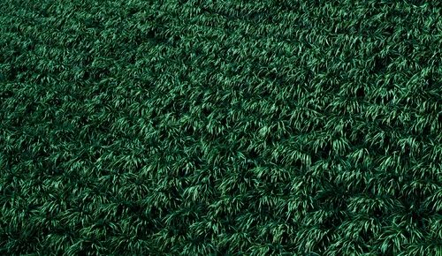6 Benefits of The Artificial Turf for Your Home Budget