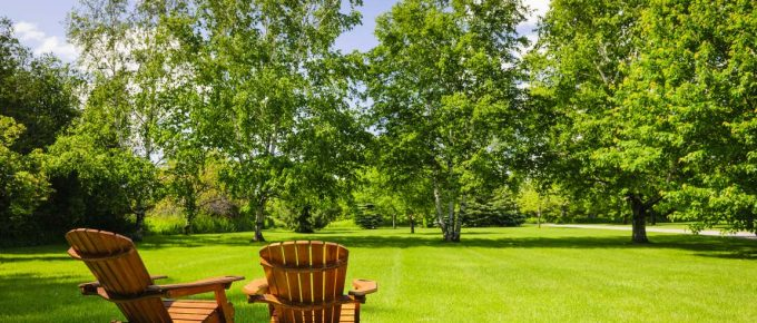 How to Care for Your Trees for a Well-Maintained Backyard