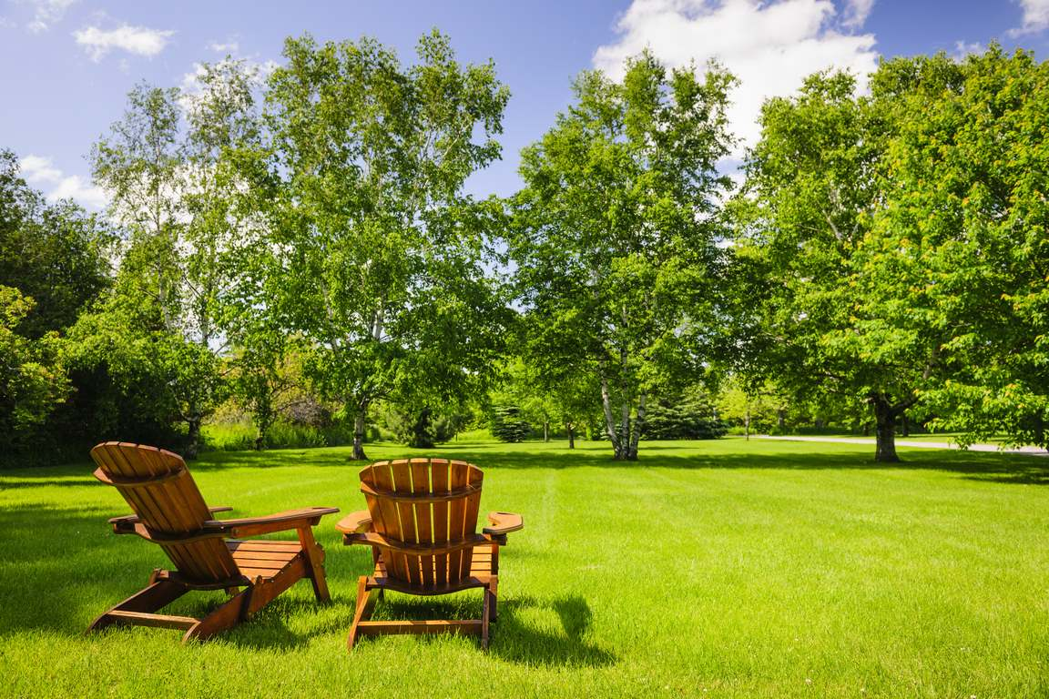 image - How to Care for Your Trees for a Well-Maintained Backyard