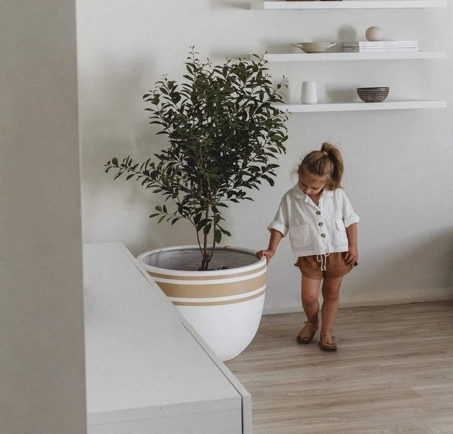 image - Shop this big beauty with Mowgli Studio