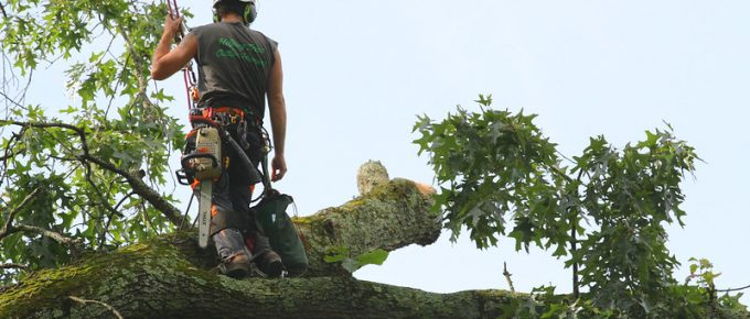 How to Start a Tree Service Business