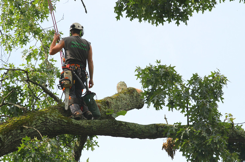 image - How To Start a Tree Service Business