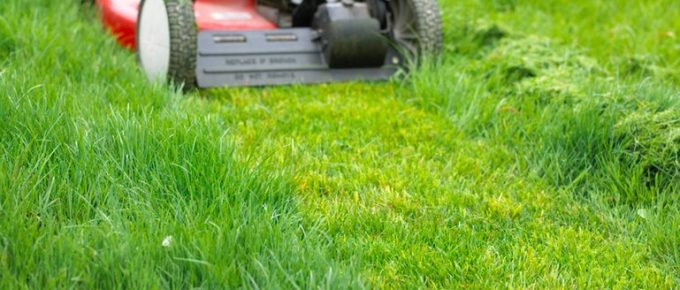 Is Mowing Your Lawn Good or Bad for the Environment