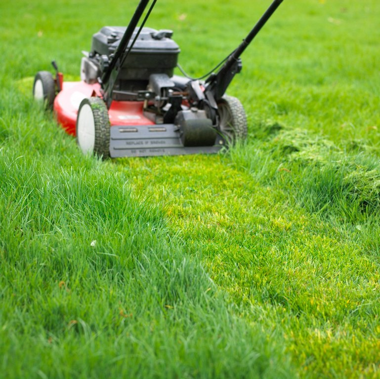 image - Is Mowing Your Lawn Good or Bad for the Environment
