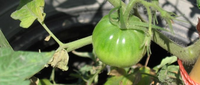What Vegetables Grow Well in Containers?