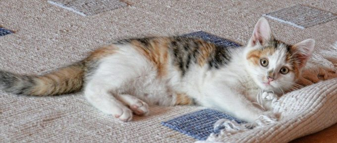 Why Professional Carpet Cleaning Is Important for Pet Owners