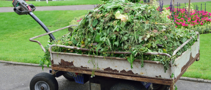 How to Get Rid of Green Waste?
