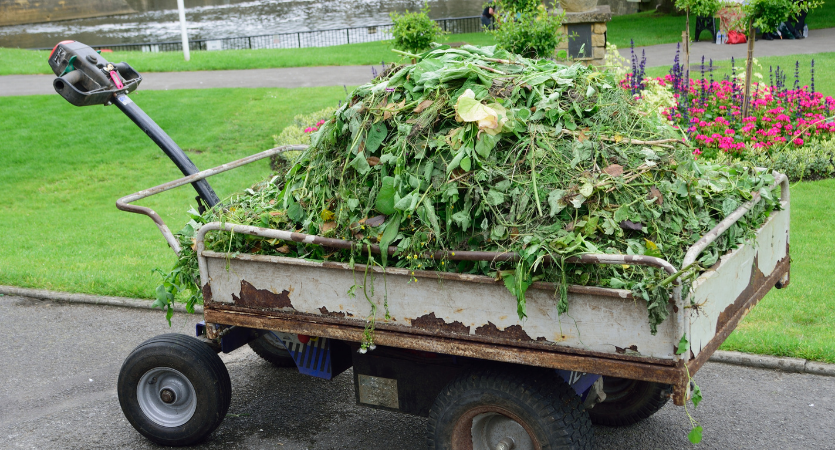image - How to Get Rid of Green Waste?