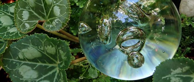 How to Buy the Best Self-Watering Globes?