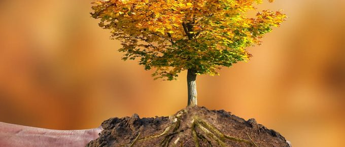 Preserve Your Trees During Drought, Five Easy Steps to Do So