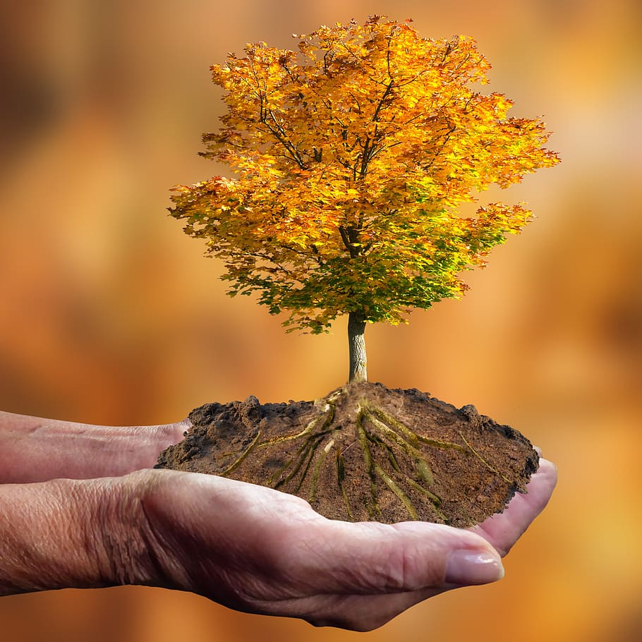 image - Preserve Your Trees During Drought, Five Easy Steps to Do So