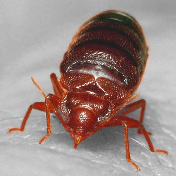image - How Can I Avoid Bringing Bed Bugs into My Home?