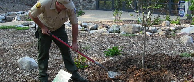 Why Replanting is Important After Tree Removal
