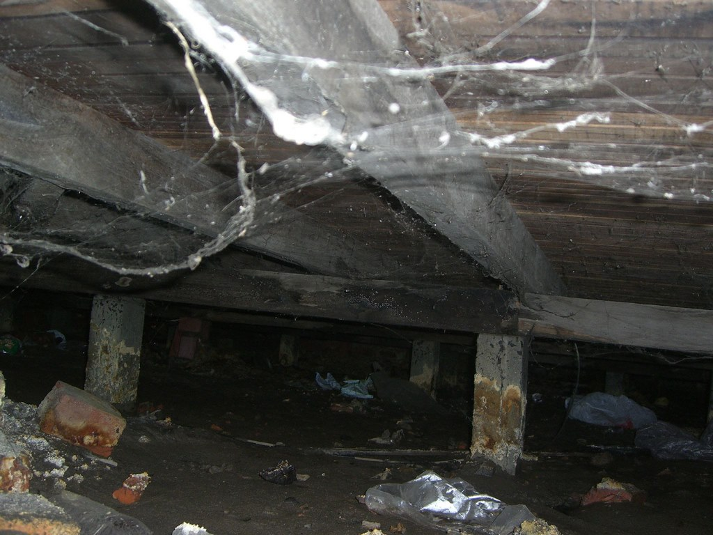 image - Ways Your Crawl Space Can Affect Your Health- Find Out Here