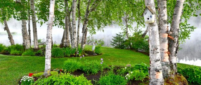 Are Your Yard and Garden Looking a Little Weary? These Tips Might Help!