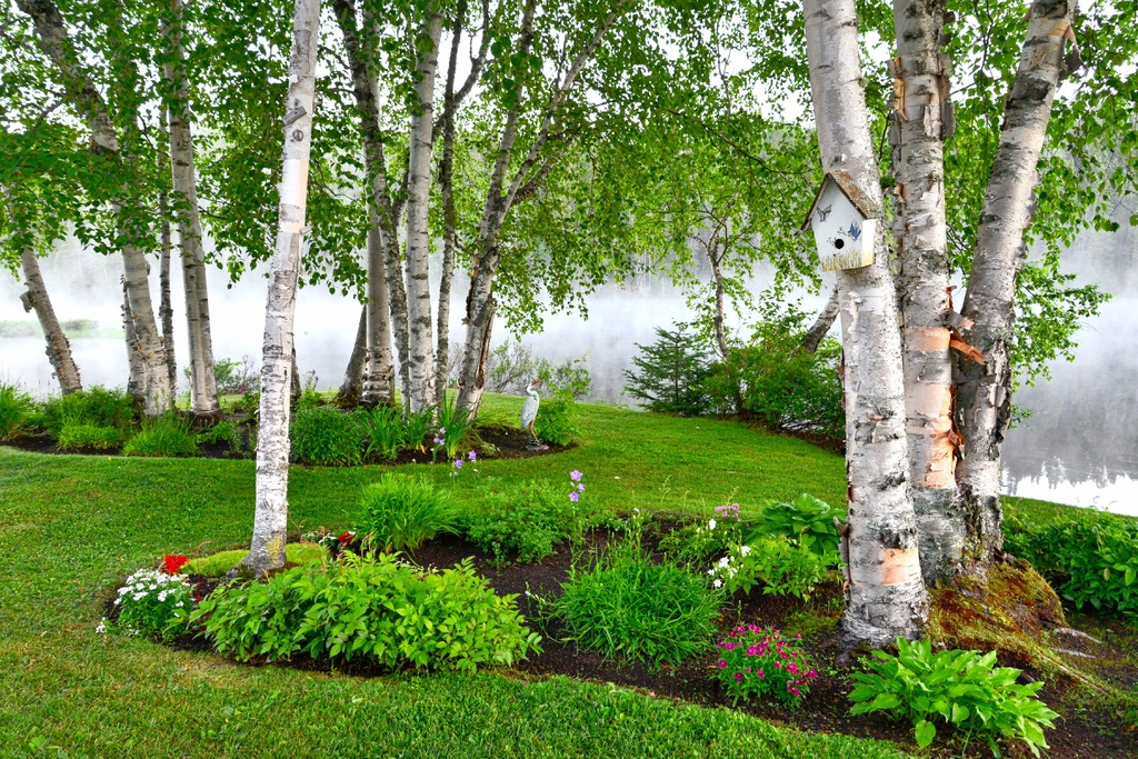 image - Are Your Yard and Garden Looking a Little Weary These Tips Might Help!