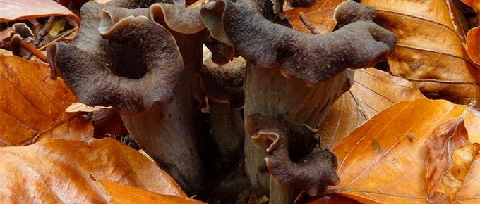 The Most Popular Edible Mushrooms Information And Recipe Suggestions