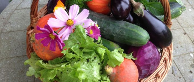 How to Take Care of Your Vegetable Garden?