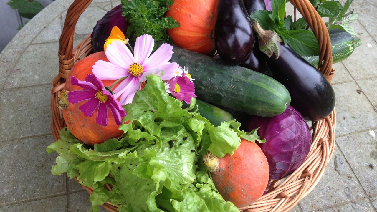 image - How to Take Care of Your Vegetable Garden