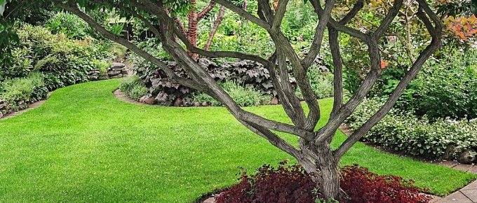 Increase the Aesthetic Appeal and Value of Your Garden with Trees