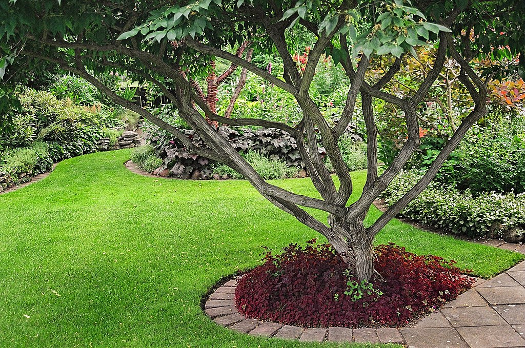 image - Increase the Aesthetic Appeal and Value of Your Garden with Trees