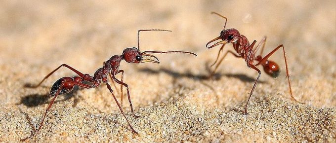 Fighting Ants: Natural Home Remedies for the Garden and Apartment