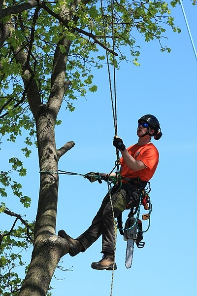 image - Why Do Reputable Tree Surgeons Charge a Small Fortune?