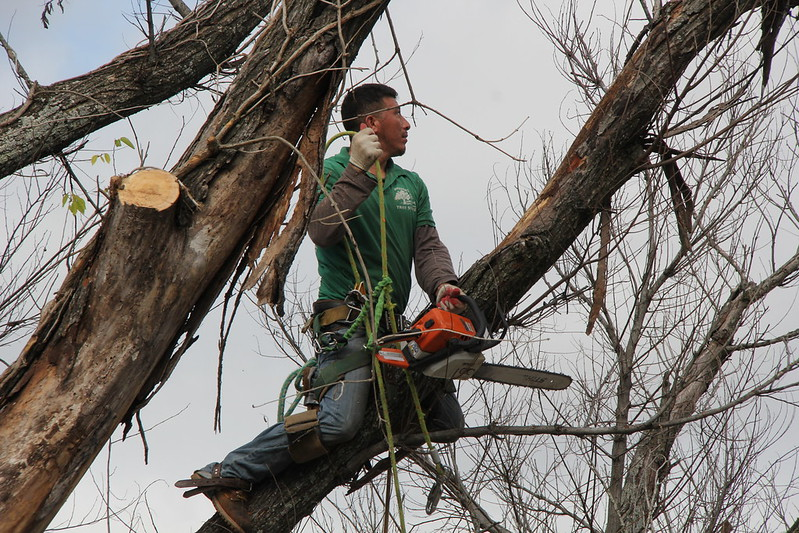 image - 9 Questions to Ask Before Hiring a Tree Removal Company