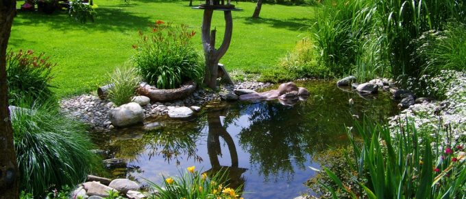 Check Out 7 Low Water Landscaping Ideas for a Beautiful and Sustainable Yard