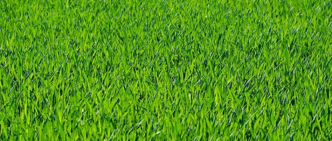 Choosing Grass Types: What's the Best Seed for Your Ohio Lawn?