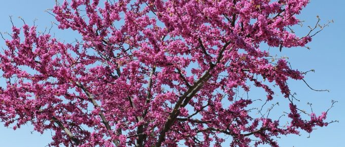 The Most Beautiful Trees to See in Ozark, Missouri